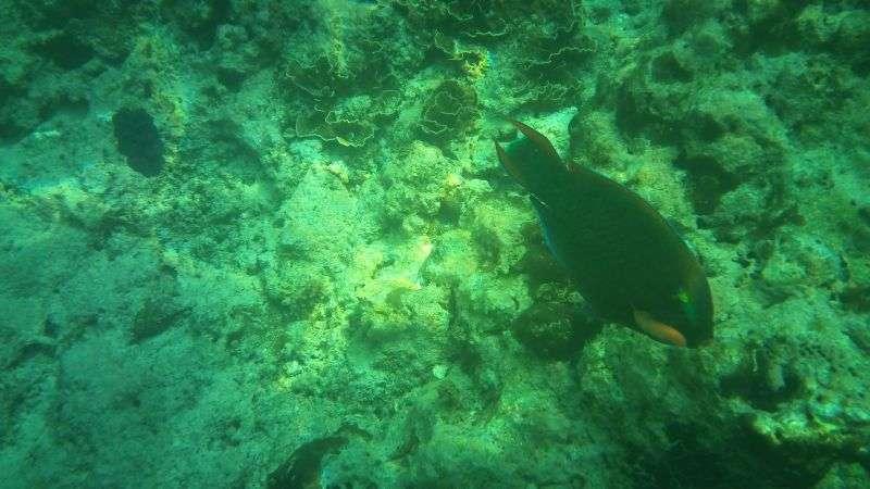 Fisch an der Maya Bay