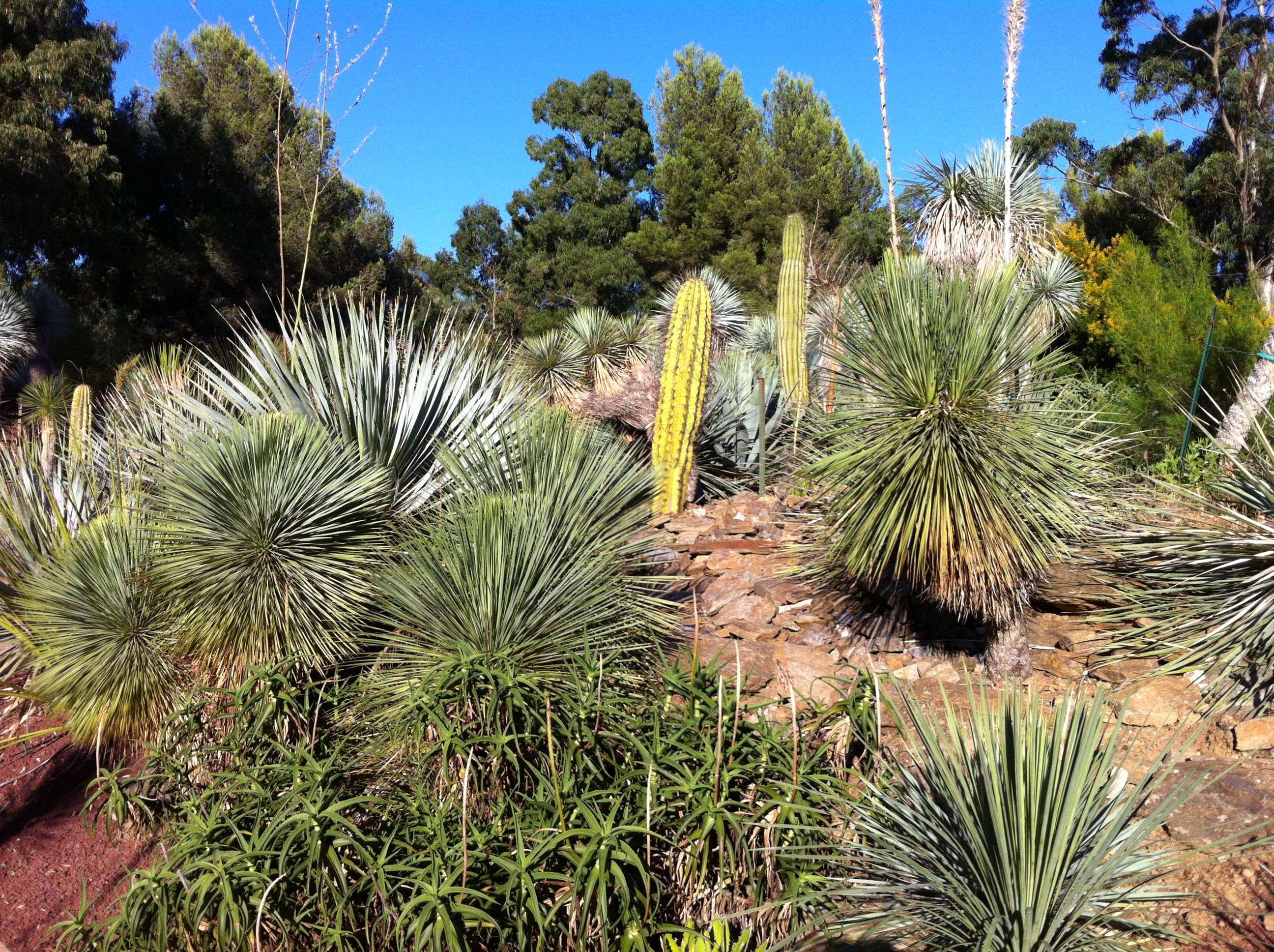 Le forum des fous de palmiers 83 visite du jardin aux oiseaux la londe les maures - Jardin des oiseaux la londe ...